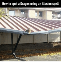Dank, How To, and Grand: How to spot a Dragon using an illusion spell Cuteness overload  By grand_dm | TW