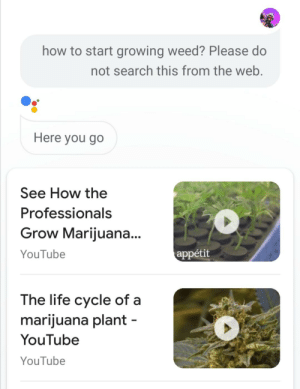Here you go.: how to start growing weed? Please do  not search this from the web.  Here you go  See How the  Professionals  Grow Marijuana...  YouTube  appétit  The life cycle of a  marijuana plant-  YouTube  YouTube Here you go.
