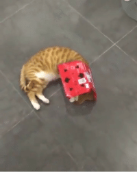 How to summon a cat @meowed cat cocacola 9gag: How to summon a cat @meowed cat cocacola 9gag