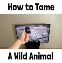 Memes, 🤖, and Wii: How to Tame  A Wild Animal Lmfao Tag someone who would love this👇🏼👥 🎮Follow my other page, no shoutouts ever 👉🏼@gamefade ➖➖➖➖➖➖➖➖ 🎮Credit; @codmemenation 🚀Turn on Post Notifications ❤️Double Tap ➖➖➖➖➖➖➖➖ ▪️Hashtags - (ignore please). CallofDuty Xbox singleplayer counterstrike BlackOps2 CodMemes Playstation Gamer Halo multiplayer Destiny Minecraft XboxOne Xbox360 GTA5 GTAV BlackOps3 9gag BO3 BO2 wiiu Games VideoGames gamers steam csgo Wii console multiplayer 😏Tag a friend if you see this😏