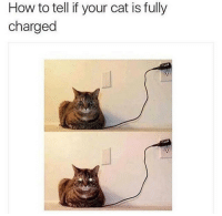 Memes, 🤖, and Ops: How to tell if your cat is fully  charged For real tho! go try it now 😃 ➖➖➖➖➖➖➖➖➖➖➖➖ New follower? Welcome to my page! ➖➖➖➖➖➖➖➖➖➖➖➖ Subscribe to my YouTube channel (link in bio) ➖➖➖➖➖➖➖➖➖➖➖➖ Follow my partners please :) @brozbncgaming @BigM3atyCLAWZZ @memika_ops @nbk_nation_ ➖➖➖➖➖➖➖➖➖➖➖➖ Follow my other page ↓ @tylerputnam2.0 ➖➖➖➖➖➖➖➖➖➖➖➖ ⬇Ignore These⬇ gamer gaming games cod callofduty blackops3 fallout4 darksouls3 xbox playstation youtube youtuber meme blackops2 codmeme funnymeme codghosts dankmemes gamingmeme modernwarfare pokemongo runescape