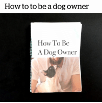 Every dog owner can relate 😂: How to to be a dog owner  How To Be  A Dog Owner Every dog owner can relate 😂