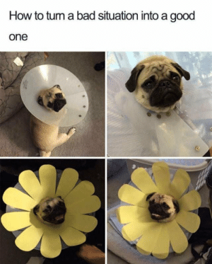 Bad, Cute, and Dank: How to tum a bad situation into a good  one Now thats a cute flower by blackphantom773 MORE MEMES