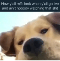 Facts, Funny, and Shit: How y'all mfs look when y'all go live  and ain't nobody watching that shit Facts 😂 Tag people who be going live