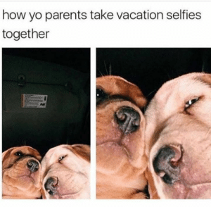 Animals, Funny, and Memes: how yo parents take vacation selfies  together 42 Funny Dog Memes That'll Make Your Day! - Lovely Animals World