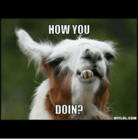 """My friend Max is the best because when I accidentally texted her """"llama"""", she sent me this. I need more people like her in my life: HOW YOU  DOIN  DIY LOL.COM My friend Max is the best because when I accidentally texted her """"llama"""", she sent me this. I need more people like her in my life"""
