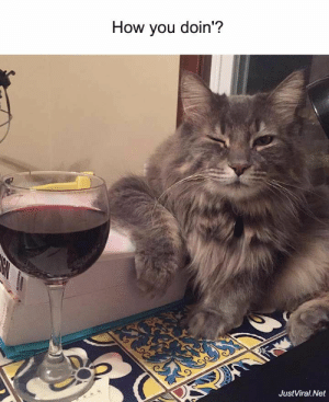 54 Funny Animal Pictures Captions That Make You Cry With Laughter - JustViral.Net: How you doin'?  JustViral.Net  tartanayE 54 Funny Animal Pictures Captions That Make You Cry With Laughter - JustViral.Net