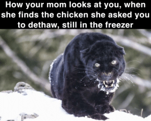 Chicken, Dank Memes, and Faith: How your mom looks at you, when  she finds the chicken she asked you  to dethaw, still in the freezer To be honest mom, it's kinda your fault for putting any faith in me