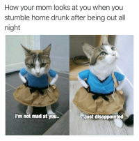 Caturday, Disappointed, and Drunk: How your mom looks at you when you  stumble home drunk after being out all  night  I'm not mad at you..  just disappointed I'm sorry Ms. Catson😿😿 oooooh iamfurreal caturday