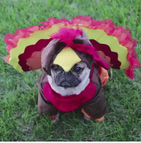 How your turkey feels the day before Thanksgiving: How your turkey feels the day before Thanksgiving