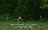 cow: However, a cow is not capable of  humour or poetry