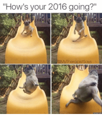 "Meme, Memes, and 🤖: ""How's your 2016 going?""  @MyTherapistsays  memes con Thank Only the finest of Doggos"