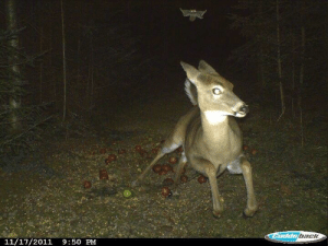 howtoskinatiger: carnivorecam:  Deer runs from flying squirrel (caught on trail camera)   This is one of the greatest images I have ever seen : howtoskinatiger: carnivorecam:  Deer runs from flying squirrel (caught on trail camera)   This is one of the greatest images I have ever seen