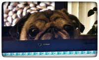 """Memes, Watch Me, and Watch: HPwubcam  m """"I always feel like somebody's watching me..."""" LOL"""