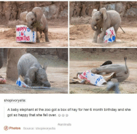 Animals, Birthday, and Elephant: HRPPY  MNTHS  6.  shopivoryella:  A baby elephant at the zoo got a box of hay for her 6 month birthday and she  got so happy that she fell over.  #animals  Photos Source: shopivoryella
