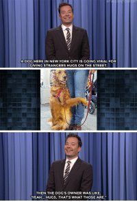 """Dogs, Hillary Clinton, and Jimmy Fallon: HT  ADOG HERE IN NEW YORK CITY IS GOING VIRAL FOR  GIVING STRANGERS HUGS ON THE STREET.  THEN THE DOG'S OWNER WAS LIKE  YEAH... HUGS, THAT'S WHAT THOSE ARE."""" <p><b>- <a href=""""http://www.nbc.com/the-tonight-show/video/justin-timberlake-hosts-hillary-clinton-fundraiser-nyc-dog-gives-hugs-monologue/3089980"""" target=""""_blank"""">Jimmy Fallon's Monologue; August 25, 2016</a></b></p>"""