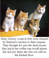 Dewey, Memes, and Coffee: Huey Dewey, Louie & Bob were stunned  by Barbara's reaction to their surprise.  They thought for sure the dead mouse  they put in her coffee cup would please  her and yet, there she was out cold on  the kitchen floor Here's to hoping your morning coffee is a little less jolting! ☕️🐭😂