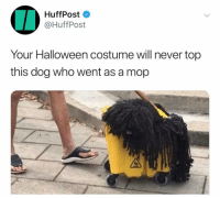 @huffpost OMG: HuffPost  @HuffPost  Your Halloween costume will never top  this dog who went as a mop @huffpost OMG