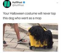 Halloween, Memes, and Never: HuffPost  @HuffPost  Your Halloween costume will never top  this dog who went as a mop Eagerly waiting for what's better.