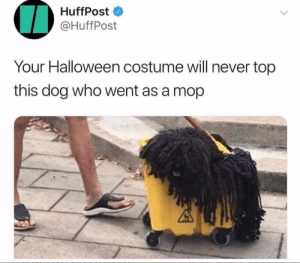 Can't wait for Halloween just to dress up my dog: HuffPost  @HuffPost  Your Halloween costume will never top  this dog who went as a mop Can't wait for Halloween just to dress up my dog