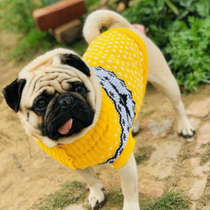 Hug Pug in Yellow :): Hug Pug in Yellow :)