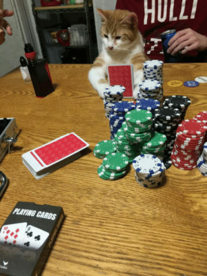 laughoutloud-club:  My husband sent me this pic of my kitten on poker night.: HULL  PLAYING CARDS laughoutloud-club:  My husband sent me this pic of my kitten on poker night.