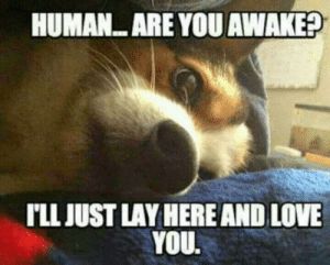 Top 10 hilarious dog memes - Marriage & Family - Home & Family ...: HUMAN ARE YOU AWAKE?  TLJUST LAY HERE AND LOVE  YOU. Top 10 hilarious dog memes - Marriage & Family - Home & Family ...