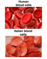 Memes, 🤖, and Cell: Human  blood cells  Italian blood  cells Tru (@yt.cougar)