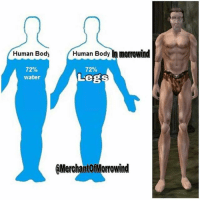 Human Body man Body In morrowind  72%  water  72%  Legs  MerchantOfMorrowind QOTP: Favourite characters from Morrowind (the game not the eso expansion)? ~ Repost from @merchantofmorrowind ~ Accounts: - Other TES IG: @tundraofskyrim - Twitter: skyrim_dragon_ - Snapchat: cocoachicken - YouTube: Link in bio. - Personal: @holly_rowlands_ • tes elderscrolls theelderscrolls elderscrollsv theelderscrollsv elderscrollsonline eso tamriel skyrim skyrimmeme skyrimmemes gaming game games rpg dovahkiin Dragonborn Bethesda dragon dragons morrowind elderscrolls3 tes3 tinysmile