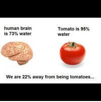 Memes, Brain, and Water: human brain  is 73% water  Tomato is 95%  water  We are 22% away from being tomatoes.. badsciencejokes