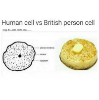 FUCKING CRUMPETS MAN 😭😭: Human cell vs British person cell  IG @LIM JUST THAT GUY  plasma membrane  cytoplasm FUCKING CRUMPETS MAN 😭😭