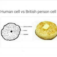 mate i used to hate crumpets (bc whenever my dad used to make them for me he put too much butter on it) but i kinda like them now tbh: Human cell vs British person cell  plasma membrane  cytoplasm mate i used to hate crumpets (bc whenever my dad used to make them for me he put too much butter on it) but i kinda like them now tbh