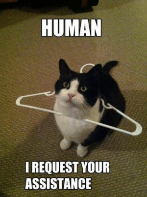 Cat Needs Assistance: HUMAN  I REQUEST YOUR  ASSISTANCE Cat Needs Assistance