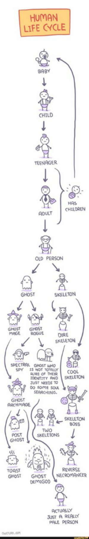 Spooky Lifecycle: HUMAN  LIFE CYCLE  SPECTRAL Spooky Lifecycle
