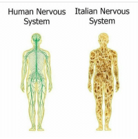 Poor Italy is starting to get made fun of now lmao. Good night!! 🌃🌃: Human Nervous Italian Nervous  System  System Poor Italy is starting to get made fun of now lmao. Good night!! 🌃🌃
