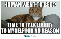 Memes, Time, and Reason: HUMAN WENT TO BED  TIME TO TALK LOUDLY  TO MYSELF FOR NO REASON  t f  Postize