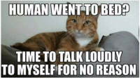 Memes, Time, and Reason: HUMAN  WENT TO BED  TIME TO TALK LOUDLY  TO MYSELF FOR NO REASON