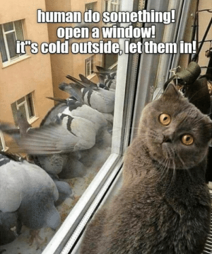 Memes, Cold, and 🤖: humando something!  open a window!  it's cold outside, let them in!