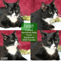 Memes, Humane Society, and Kittens: HUMANE  SOCIETY  FREddy  6 years  Neutered Male  Front  Declawed  DSH Tuxedo Join us this Friday for our Black Fur-Day Sale!! Adoption Specials ALL day, November 25th! Early Bird Special 12-2 pm: NO FEE ALL Cats/Kittens, ALL Dogs $50 adoption fees! 2-5 pm: ALL adoption fees 1/2 off! We will close at 5 pm, November 25th! Don't miss out on these awesome adoption specials! The long holiday weekend is a great time to bring home a new furry family member! All animals are spayed/neutered, vaccinated, heartworm tested or FIV/FeLV tested. #blackfurday #adoptionspecials #nofee #halfoff #hsomc #betterthanshopping  All of the Cat House Cats RESIDE within the Shelter and are AVAILABLE for adoption!!!!  Their adoption fees will vary between NO FEE and $40.  All adult cats are adopt one, adopt the 2nd for only $10!  Please read each separate explanation for info on the animal.