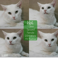 Memes, Humane Society, and Kittens: HUMANE  SOCIETY  hat  1 year  Spayed  Female  DSH White  FIV Positive Join us this Friday for our Black Fur-Day Sale!! Adoption Specials ALL day, November 25th! Early Bird Special 12-2 pm: NO FEE ALL Cats/Kittens, ALL Dogs $50 adoption fees! 2-5 pm: ALL adoption fees 1/2 off! We will close at 5 pm, November 25th! Don't miss out on these awesome adoption specials! The long holiday weekend is a great time to bring home a new furry family member! All animals are spayed/neutered, vaccinated, heartworm tested or FIV/FeLV tested. #blackfurday #adoptionspecials #nofee #halfoff #hsomc #betterthanshopping  All of the Cat House Cats RESIDE within the Shelter and are AVAILABLE for adoption!!!!  Their adoption fees will vary between NO FEE and $40.  All adult cats are adopt one, adopt the 2nd for only $10!  Please read each separate explanation for info on the animal.