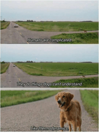 Dogs, Memes, and Thermodynamics: Humans are complicated  They do things dogs can't understand  Like thermodynamics We dont deserve dogs. via /r/memes https://ift.tt/2PFzAX4