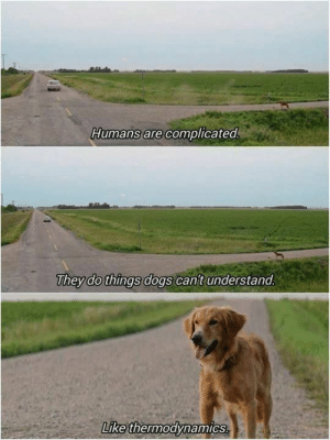 We dont deserve dogs. by itsyaboikimmo MORE MEMES: Humans are complicated  They do things dogs can't understand  Like thermodynamics We dont deserve dogs. by itsyaboikimmo MORE MEMES