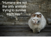 """douglas williams: """"Humans are not  the only animals  trying to survive  each day.  Anthony Douglas Williams  Inside The Divine Pattern"""
