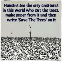 Memes, Tree, and Trees: Humans are the only creatures  in this world who cut the trees,  make paper from it and then  write 'Save The Trees on it  SAVE  TH  SAVEA  ASAPE