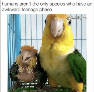 Animals, Cute, and Love: humans aren't the only species who have  awkward teenage phase We love those annoying little squawkers! #Memes #Animals #Bird #Cute
