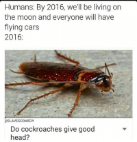 Do they tho ?: Humans: By 2016, we'll be living on  the moon and everyone will have  flying cars  2016  asLAVESCOMEDY  Do cockroaches give good  head? Do they tho ?