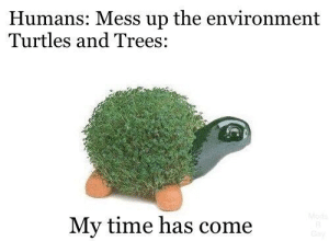 Time, Trees, and Dank Memes: Humans: Mess up the environment  Turtles and Trees:  Mode  My time has come  y We're all gonna die