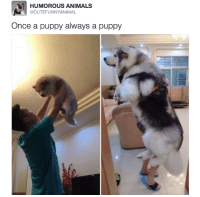 big doggy!!!!!!: HUMOROUS ANIMALS  @CUTEFUNNY ANIMAL  Once a puppy always a puppy big doggy!!!!!!