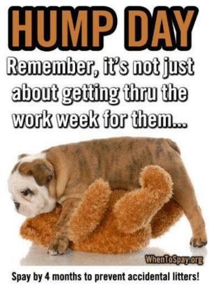Facebook, Hump Day, and Memes: HUMP DAY  Remember, it's notjust  about geting thru the  work week for them..  WhenToSpayorg  Spay by 4 months to prevent accidental litters! HEY! Guess what day it iiiiis?! Unfortunately EVERY DAY is hump day for your un-neutered pets. Males who smell a female in heat will be obsessed and will do whatever it takes to find her! Take the hump out of hump day for your pets and have them spayed or neutered!  If you are a low income pet owner in Northeast Louisiana, we can help http://pawsnela.org/docs/Spay-Neuter-Application.pdf.  If you are NOT a low income pet owner, we are having a spay/neuter giveaway contest through 2/28/19. Check it out here https://www.facebook.com/72059191585/photos/a.10150479045661586/10156137605501586/?type=3&theater.