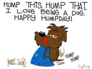 Hump Day, Love, and Memes: HUMP THIS. HUMP THAT  I LOVE BEING A DOG.  HAPPU HUMPDAY!  HUMP  HUMP  S e  Dos Hump this, Hump that, Love being a dog. Happy Hump Day BOL        #dog